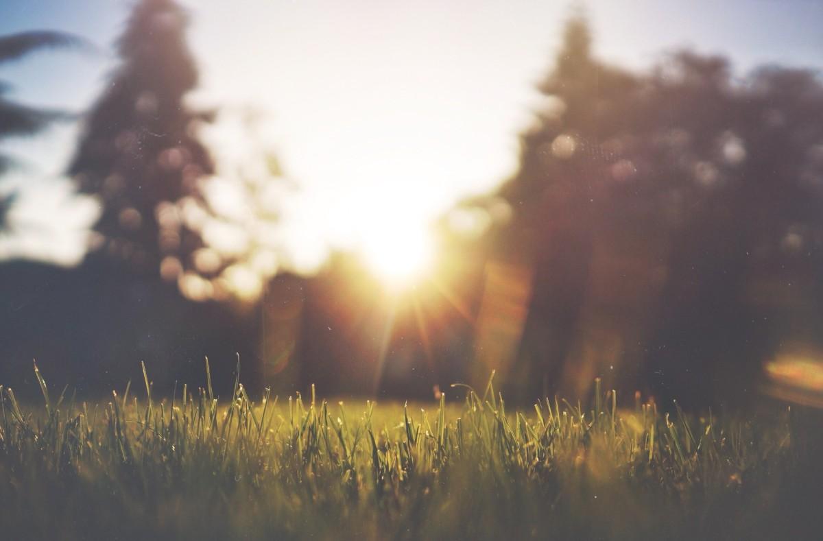 trädgårdshjälp på svenska sommar