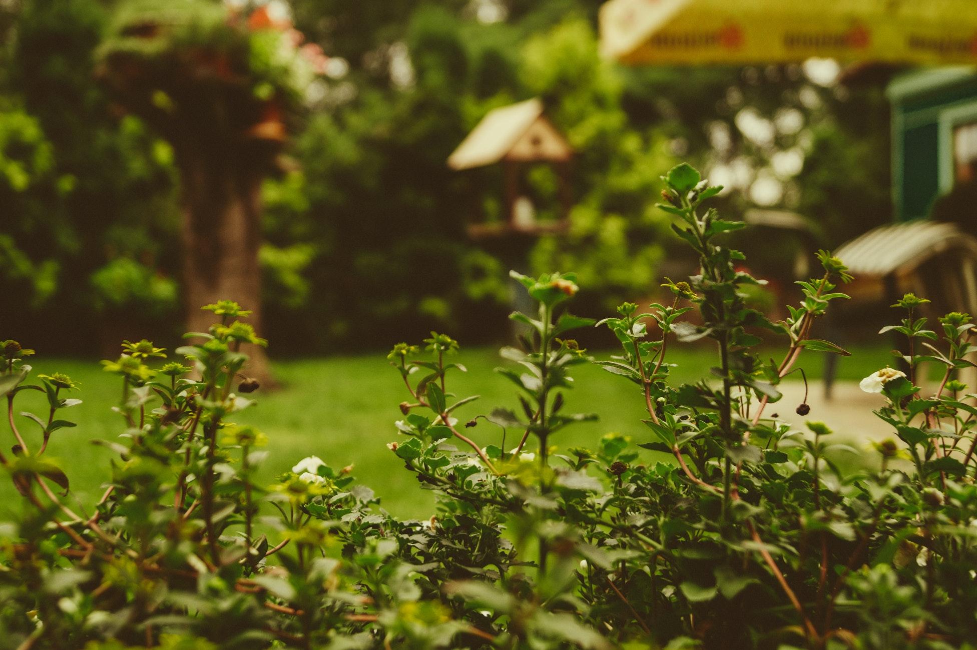 via Yepstr hittar du trädgårdshjälp enkelt och vitt