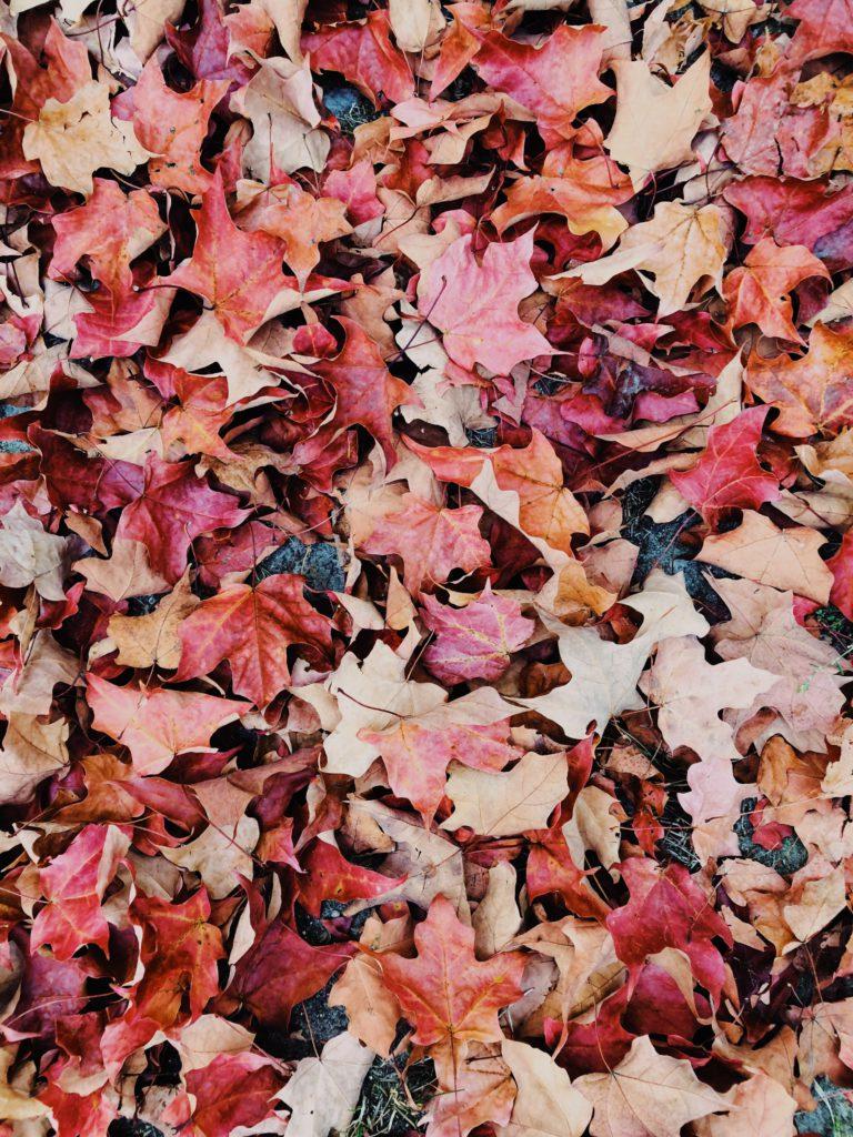 att kratta bort löv från marken är viktigt att göra i trädgården i oktober
