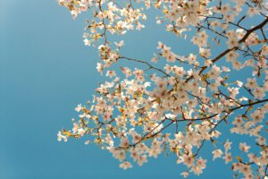 träd med fina blommor