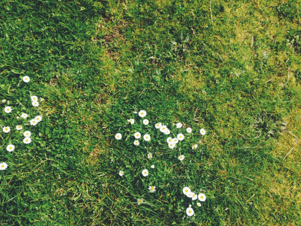 att växa en gräsmatta med blommor är något som kan vara bra att göra i trädgården i juli