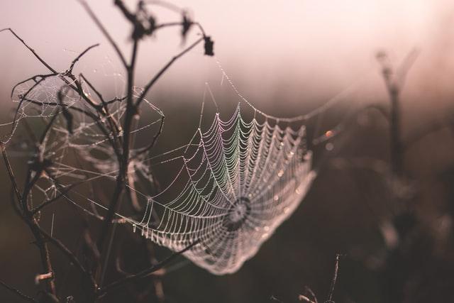 Spindelnät - barnsånger med rörelser