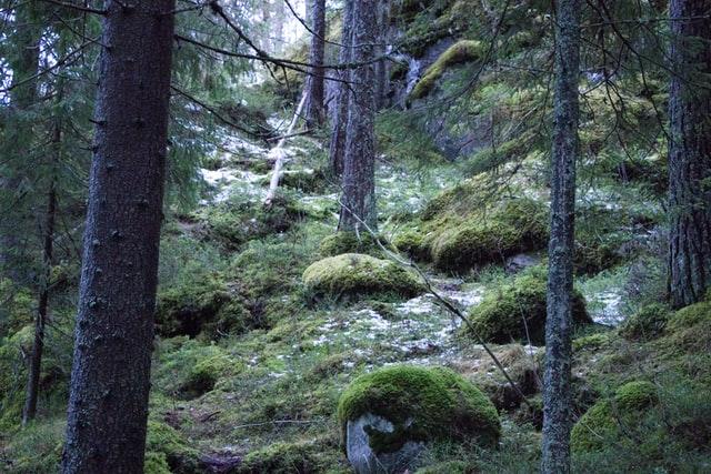 Skog - När trollmor hart lagt de elva små trollen