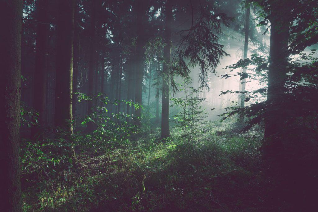 Skog - när trollmor har lagt de elva små trollen