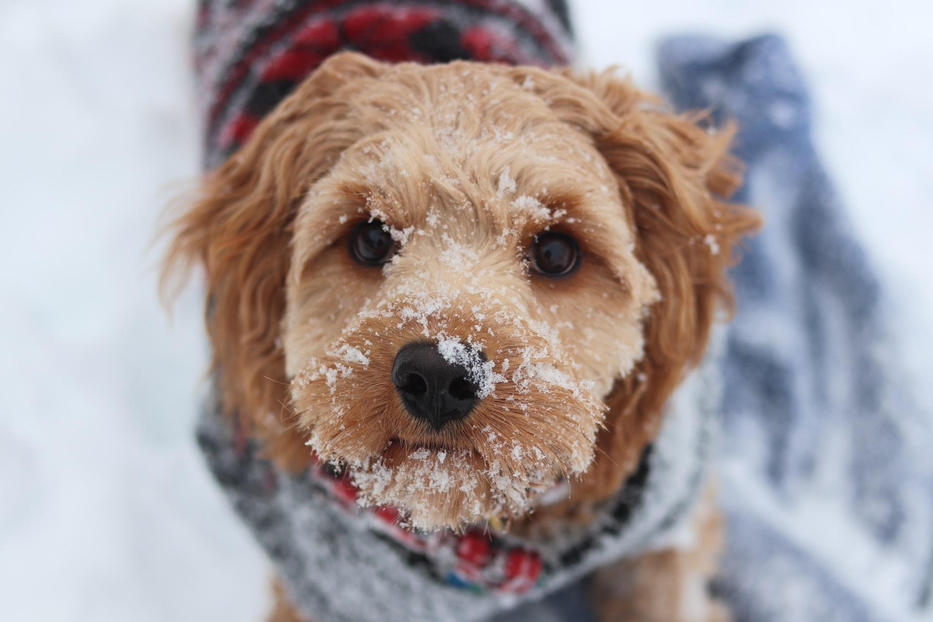 på vintern är det vanligare att hundar skakar men lättare att förstå varför