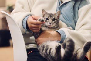 en veterinär som håller i en katt