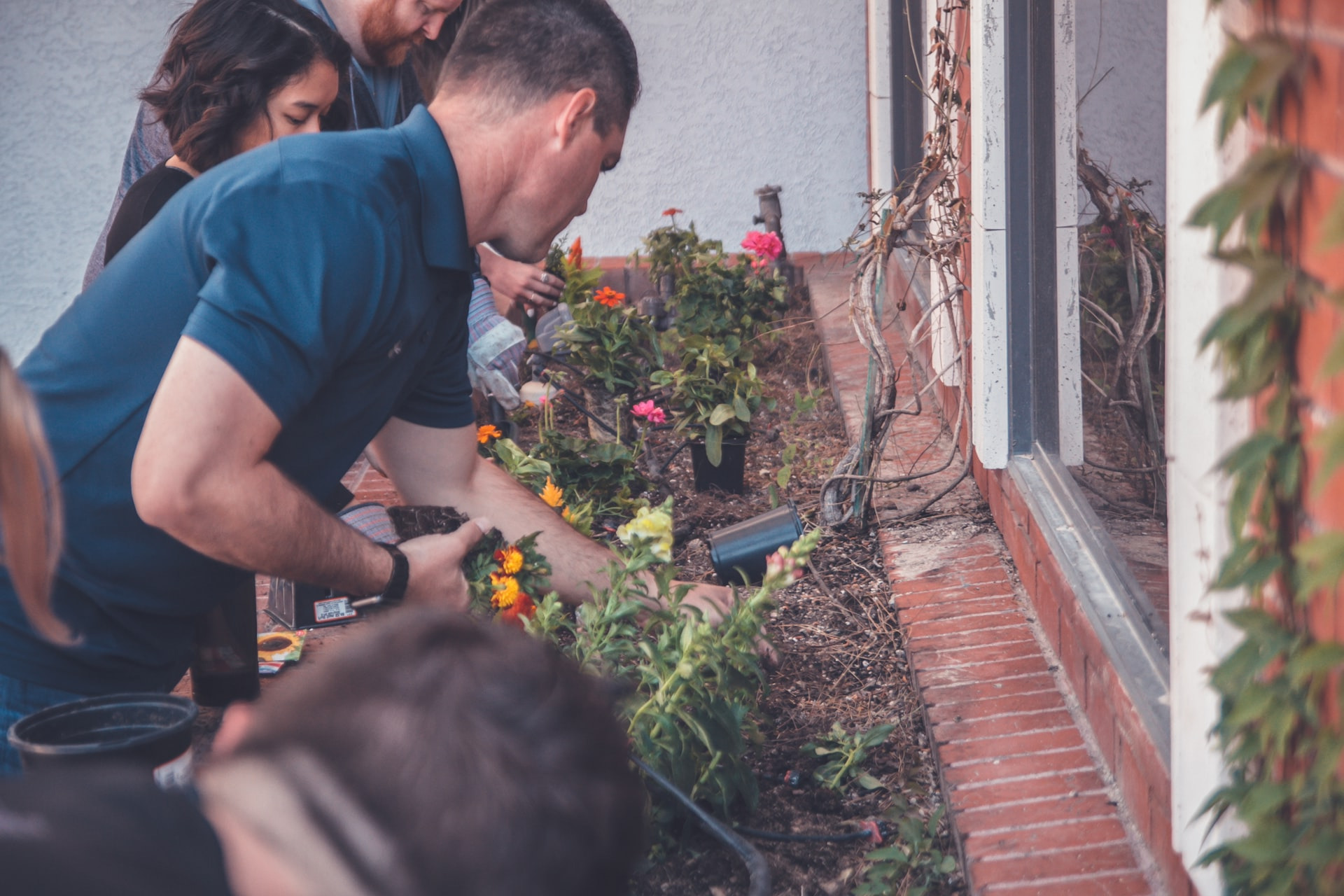 trädgårdshjälp