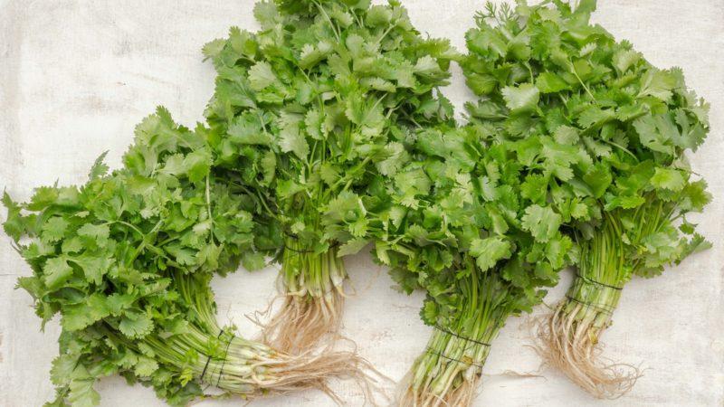 Odla koriander hemma är ett enkelt sätt att uppgradera kryddskåpet