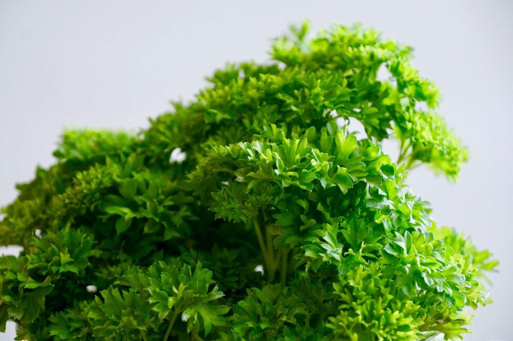 Att odla persilja hemma är lika enkelt på balkongen som i trädgården