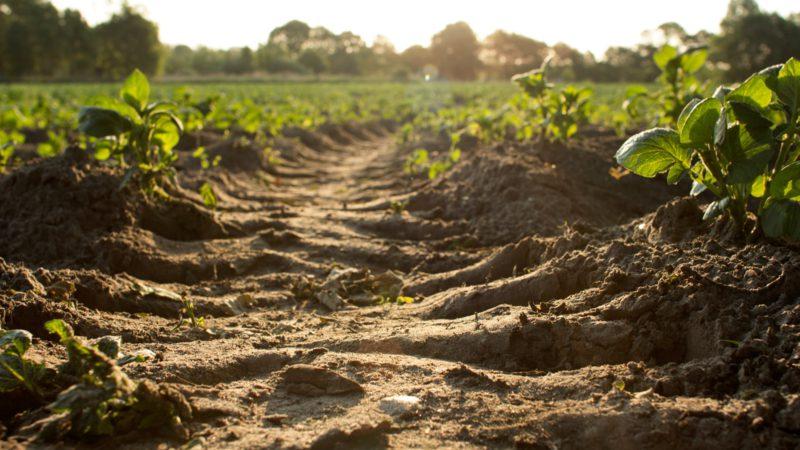 Planteringsjord är väldigt individuellt för varje planta. Ofta går det okej med många men bra med få
