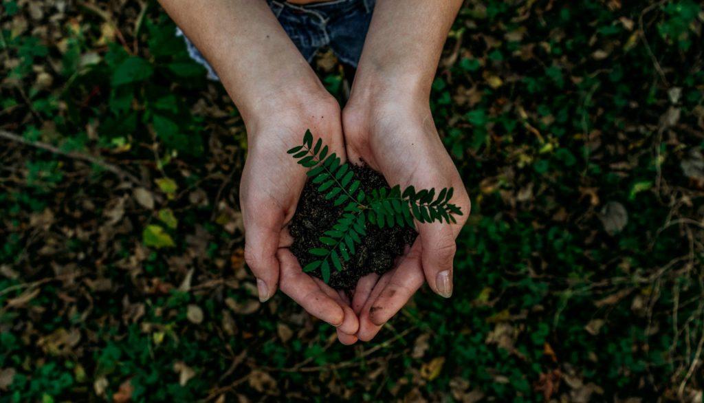 Välj rätt planteringsjord för din planta!